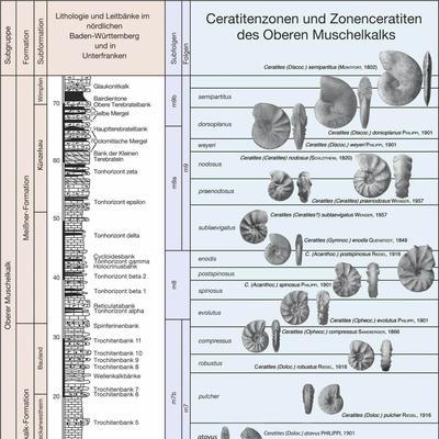 Ceratiten Biostrategraphie