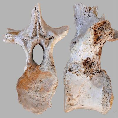 Pistosaurus