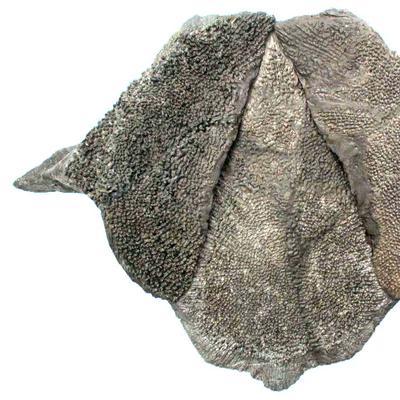 Plagiosuchus